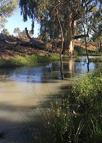 Murray-Lower Darling catchment, Tuppal Creek near Tocumwal