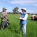 Gwydir Environmental Water Advisory Group at work in wetlands on Old Dromana