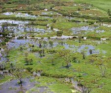 An aerial view of a wetland in the Macquarie Marshes