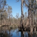 Werai Forest, an Indigenous protected area near Deniliquin