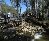 Water releases at Mathoura aim to boost Murray Cod