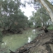 The Speewa Creek near Swan Hill
