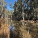 Wild Dog Creek. Flow returning to Edward River from Millewa Forest.