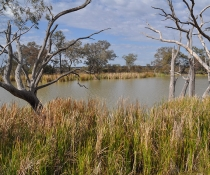 Gwydir Wetlands in the North West Slopes region of north-eastern New South Wales