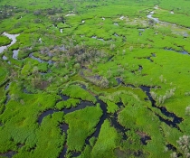 Macquarie Marshes Nature Reserve aerial view