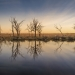 Mid Murray River wetlands at sunrise