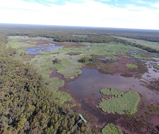 Aerial view of marshland