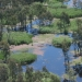 Aerial view of river red gums and common reeds