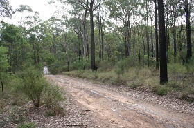 Dirt road running through threatened Shale Sandstone Transition Forest on the Fernhill Central West biobank site. Photo: OEH