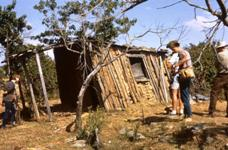 Visitors inspect a wattle and daub hut at Hill End Historic Site