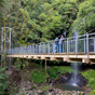 The Wonga Walk takes you over Crystal Shower Falls on the new suspension bridge, Dorrigo National Park (Image: Michael van Ewijk)