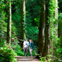 Magnificent tall trees line the Wonga Walk, Dorrigo National Park (Image: Hamilton Lund/Tourism NSW)
