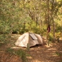 Forest camping at Neranie campground, Myall Lakes National Park (Image: Shane Chalker)
