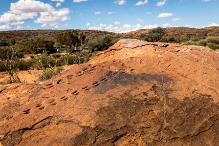 Fossil footprints in Devonian sandstone, Mutawintji Historic Site (Photo: J Spencer/OEH)