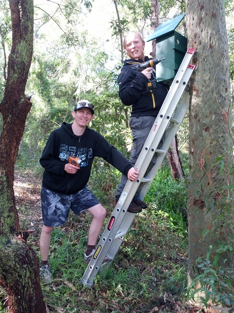 Installing nest boxes for squirrel gliders. Photo: S Prichard